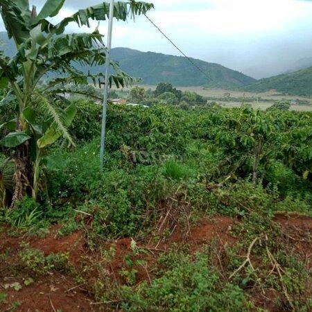 Cần Bán Đất Bảo Thuận Nở Hậu- Ảnh 1