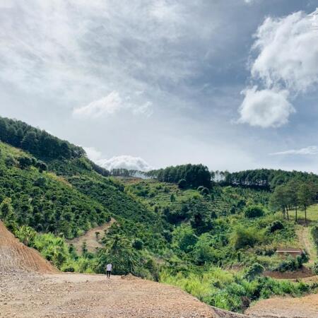 Combo nhà gỗ vườn rau đất ven Đà Lạt chỉ 1tỷ200tr rẻ nhất khu vực- Ảnh 4