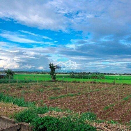Đất Hẻm Tố Hữu Gần Ngã 3 Duy Hoà View Ruộng- Ảnh 3