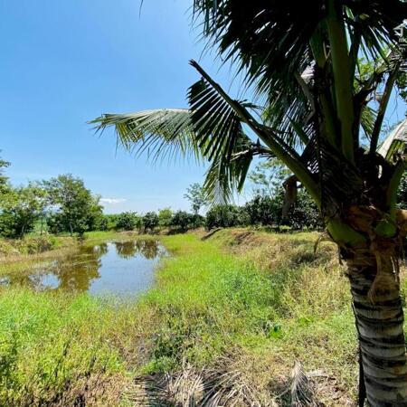 bán đất tặng vườn Bưởi 5 ha có sẵn nhà vườn ao cá giá rẻ LH 0788.558.552- Ảnh 1