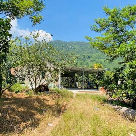 bán đất tặng vườn Bưởi 5 ha có sẵn nhà vườn ao cá giá rẻ LH 0788.558.552- Ảnh 3