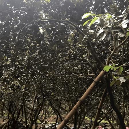 Bán Giúp người anh giá ngộp mùa dịch, xã Phú thịnh, tân Phú,đồng nai- Ảnh 3