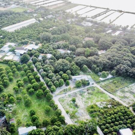 Đất 100% Thổ cư đầm Thủy Triều - Giá F0 đầu tư x2 x3 trong 2-3 năm- Ảnh 3