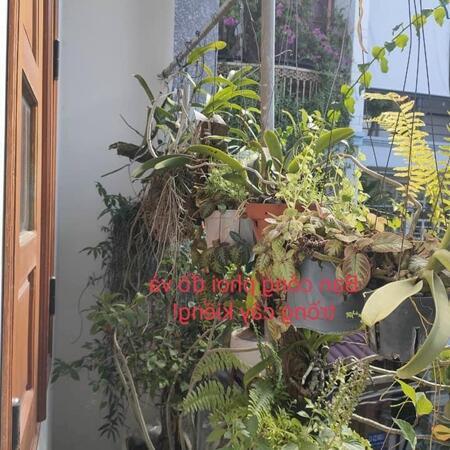Nhà  2 tầng cực đẹp Quang Trung,P.8,GV:lô góc,HXH, 62m2 chỉ 4.35 tỷ- Ảnh 6