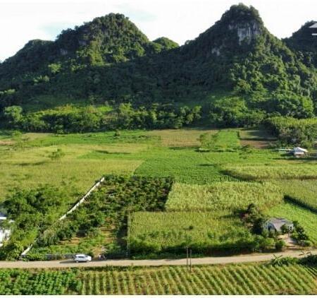 Bán gấp 3200m2 có 400m đất ở full bưởi và chanh đào,tường bao vây xung quanh, mặt đường- Ảnh 6