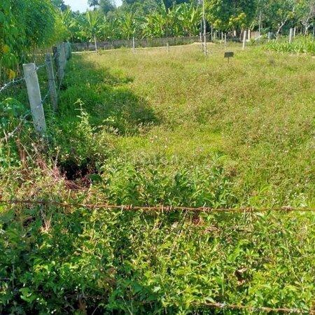Bán Đất Phú Phong Giá Rẻ- Ảnh 2