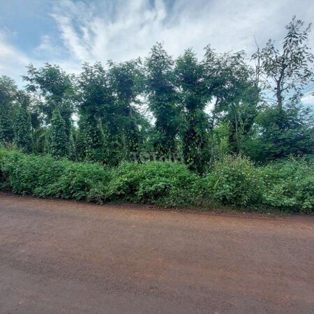 Đất Huyện Cư Kuin 440M2.Thổ Cư 90- Ảnh 3