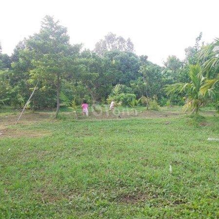 Đất Chuyển Đổi Huyện Ninh Giang 7000M²- Ảnh 3