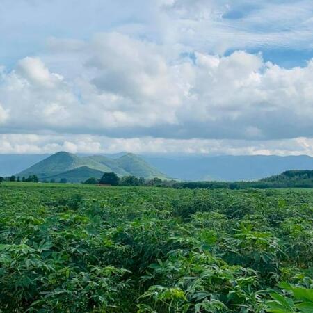 bán 5 lô đất hơn 100ha  Ninh Hòa, Khánh Hòa giá rẻ LH 0788.558.552- Ảnh 2