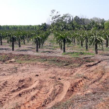 Nhiều Đất Tiến Thành-Phan Thiết-Bình Thuận-Gần NoVaWorld,gần Lạc Long Quân,gần ĐT 719B.- Ảnh 2