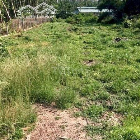 Cần Bán Gấp Miếng Đất Thổ Vườn- Ảnh 3
